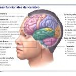 cerebro 2
