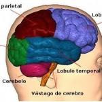 cerebro 3