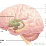 cerebro 4